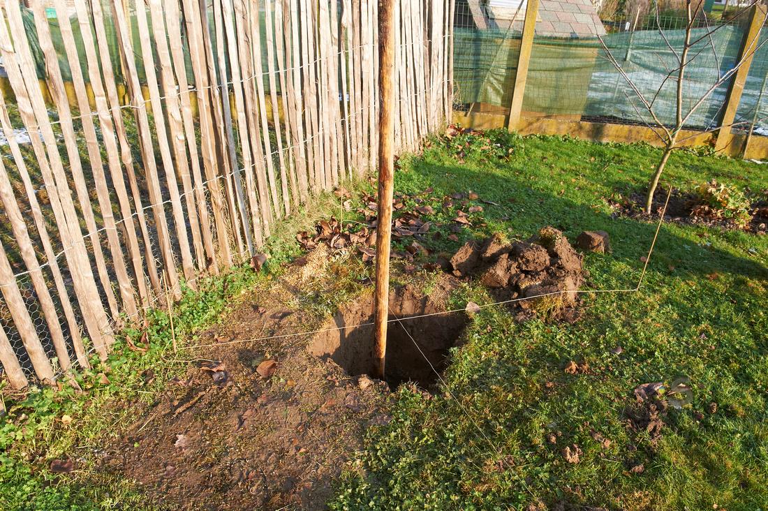 De fruitberg hoe plant ik een fruit boom - Hoe een boom te verlichten ...